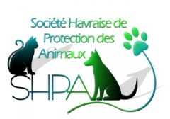 shpa,spa,animaux,animal perdu,animal trouv,trouv chien,trouv chat,perdu chien,perdu chat,nac le havre