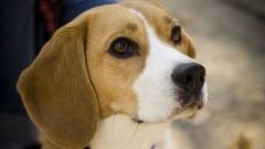 Faire garder votre animal pendant vos vacances : les solutions au Havre