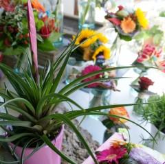le havre,havraise,aodren,aux iris,fleuriste,fleurs le havre,fleuriste au havre,fleuriste le havre
