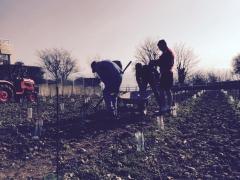 Plantez de la vigne au Havre vendredi 24 et samedi 25 avril 2015
